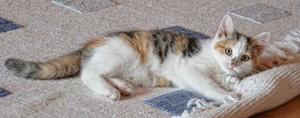 Carpet - The Kitten's Choice!