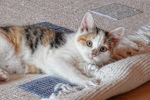 carpet-kitten2